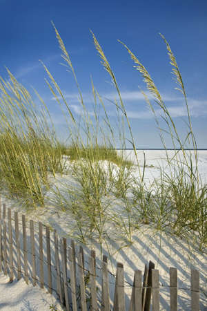 pensacola beach: Peaceful, secluded beach scene: sand dunes, sea oats, dune fence landscape. Stock Photo