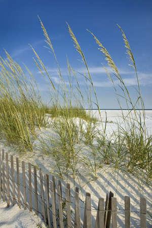 Rustige, afgelegen strand scène: zand duinen, zee haver, duin hek landschap.