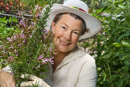 menopause: A happy mature woman thinning out the rosemary in her garden. Closeup shot. Stock Photo