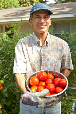 Happy mature male holding the tomatoes he has just picked in his urban organic front yard garden. photo