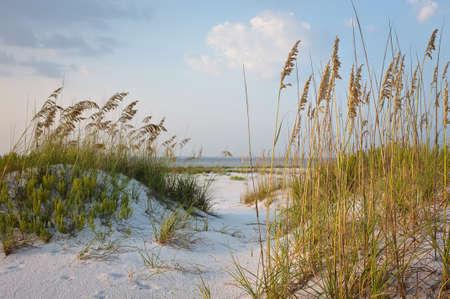 duna: Ruta de playa en las dunas de arena con avena mar, al atardecer