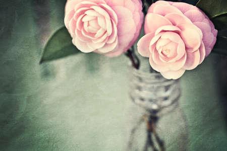 camellia: Due Camelie Perfection rosa in una bottiglia di medicina antica. Foto � stata strutturata per creativamente pittorica, look vintage. Buona base per la festa della mamma o qualcosa del genere femminile.