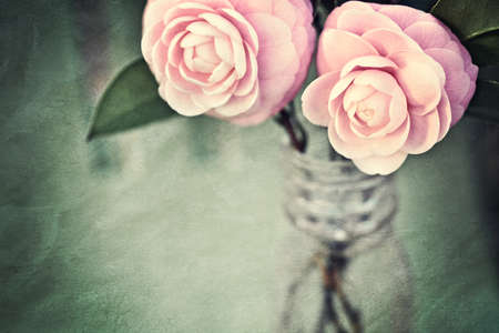 Two Pink Perfection Camellias in an antique medicine bottle. Photo has been creatively textured for painterly, vintage look. Good background for mothers day or something feminine. photo