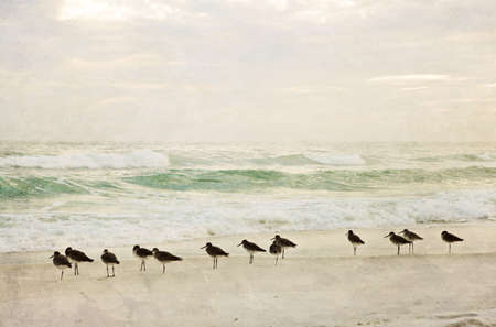 Painterly, textured beach and surf with birds at sunset