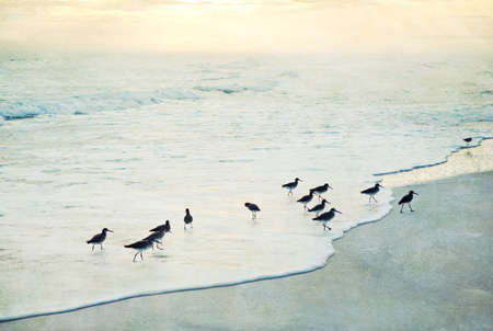 painterly: Painterly, textured beach and surf with birds at sunset