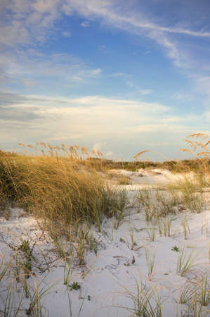 barrier island: Gulf Coast USA dunes at barrier island at sunset showing flora of Florida.