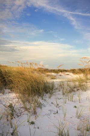 pensacola: Gulf Coast USA dunes at barrier island at sunset showing flora of Florida.