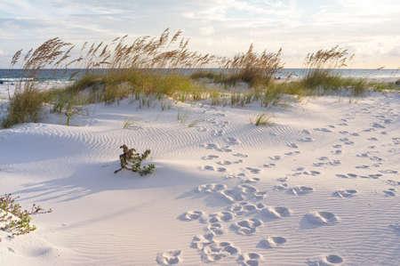 duna: Puesta de sol en la playa de Pensacola, en Florida. Huellas en la arena en la puesta del sol del paisaje. Foto de archivo