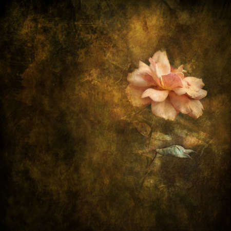 painterly: Peach colored rose against painterly background  Stock Photo