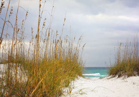Sandy Path leads through the dunes to beautiful turquoise beach in Florida. Surrounding the path are local plants  sea oats that help to stabilize and grown beach sand dunes. 版權商用圖片