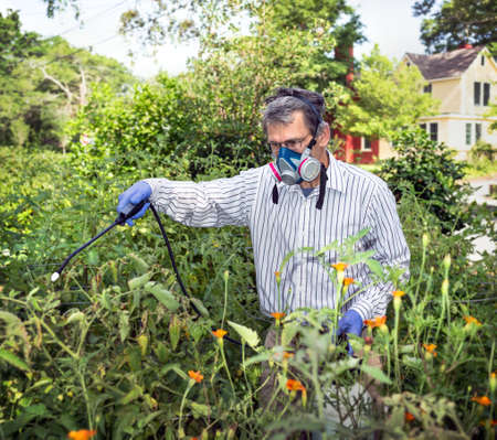 Man in face mask and gloves spraying tomato plants with bug spray in garden