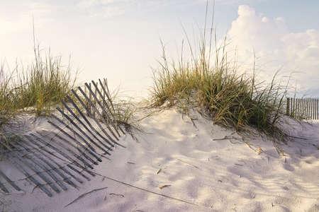 Zachte vroege ochtend zonlicht schildert de duinen en de zee haver op een zandstrand geaccentueerd door verweerde houten zand hekken