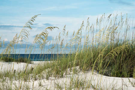 Sea oats and native dune grasses in the sand dunes, overlooking deep blue water of the Gulf of Mexico  Stock Photo