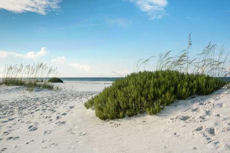Duinen, zee haver en strand rozemarijn op een ongerept strand van Florida