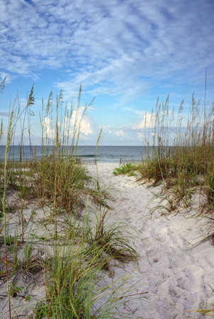 vertical: Beach path through white sand dunes and sea oats leads to calm ocean on a summer morning  Stock Photo