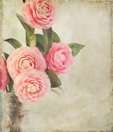 Pink Perfection Camellias in an antique medicine bottle. Photo has been creatively textured for painterly, vintage look. Good background for mother's day or something feminine. Standard-Bild