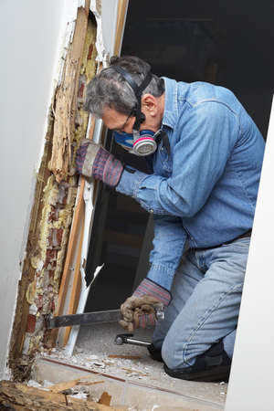 exterminator: Man removing sheetrock and wood damaged by termite infestation in house