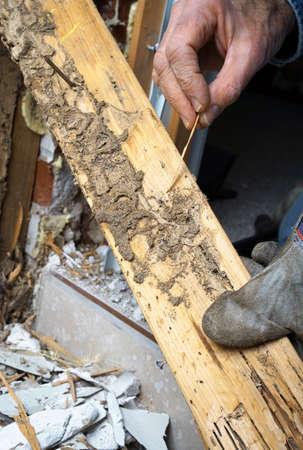 Close-up foto van manCloseup foto van de man die live termieten en schade