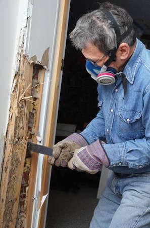 Man het verwijderen van hout beschadigd door termieten besmetting in huis Stockfoto