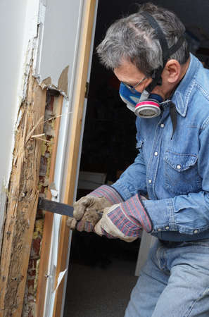 soggy: Man removing wood damaged by termite infestation in house  Stock Photo