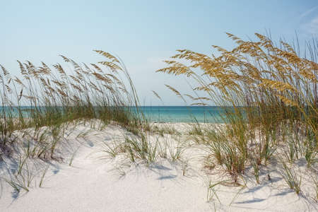 florida landscape: Florida Sand Dunes and Sea Oats at the Beach Stock Photo