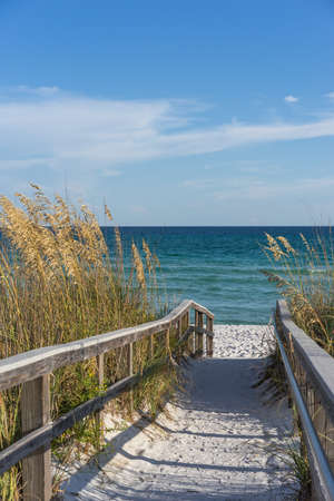 sea oats: Sandy boardwalk path to a snow white beach on the Gulf of Mexico with ripe sea oats in the dunes