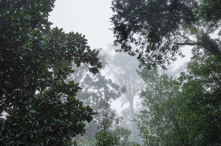 humid: Huge live oaks and dark waxy magnolia trees form a moody canopy on a foggy humid morning in the Deep South USA. Good mortice or background shot.