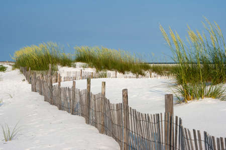 Sand fence among ripe sea oaats helps prevent erosion in dunes on Santa Rosa Island in Pensacola.