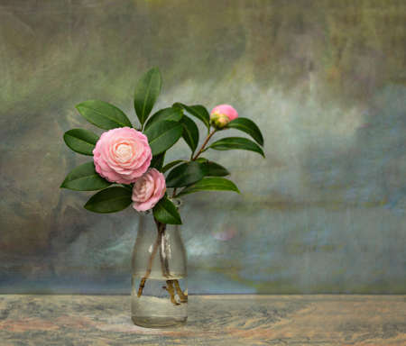 Artistic textured still life of pristine Pink Perfection Camellias in a vintage milk bottle against a canvas background. Stok Fotoğraf