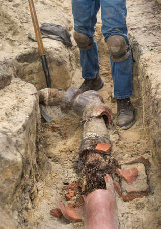 Man with shovel in trench showing old broken terracotta ceramic sewer line completely filled with invasive tree roots.