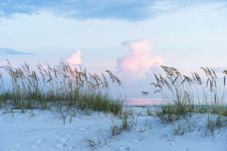 Soft muted blues and pinks adorn a pristine Florida beach at sunset, complete with white sand dunes and sea oats.