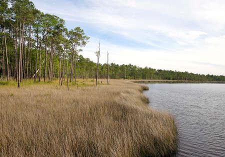 Saw Grass and Slash Pine Habitat on Perdido Bay at Tarkiln Bayou Preserve State Park