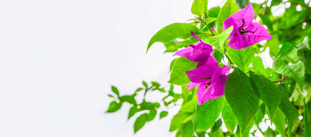 banner: background with tropical flowers Stock Photo