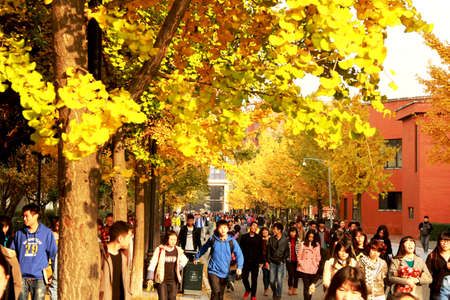 recognize: Winter sun through yellow leaves appear yellow leaves thoroughly, making recognize exceptionally good mood.