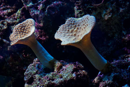 polyp: Aquarium corals underwater