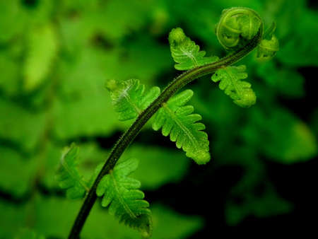 green fern photo