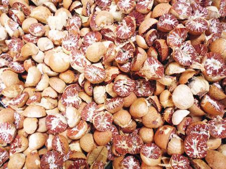 Dried Betel Nut or Areca Nut photo