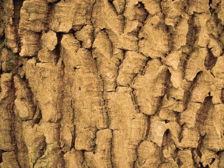 face in tree bark: Tree bark texture  abstract background