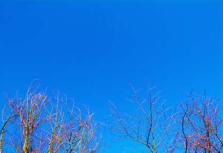 destitute: dry branches of a tree in blue sky Stock Photo