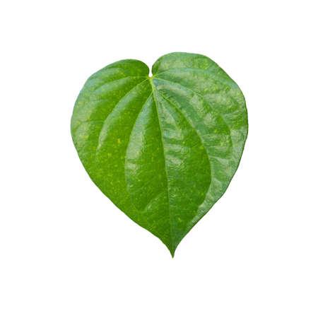 leaf shape: green leaf heart shape isolate on white background