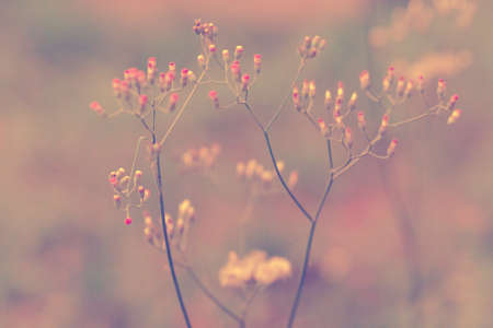 Blur and sof  Grass Flower  soft focus  abstract spring ,nature background Stock Photo
