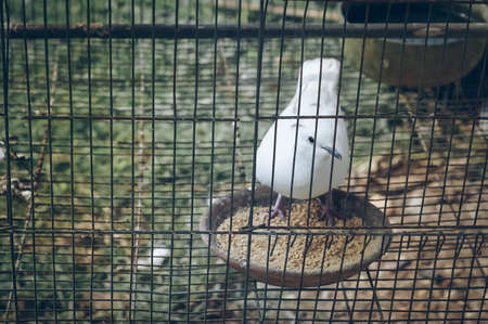white bird in the cage, freedom concept