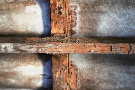 Woningbouw met termietenschade Stockfoto