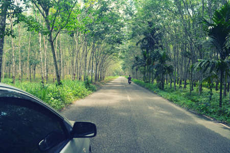 car and motocycle travel on  green rubber plantation pathway  in Asia . Travel  concept  background. Stock Photo