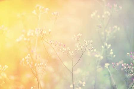 Soft focus Grass Flower  abstarct spring ,autumn nature background Stock Photo