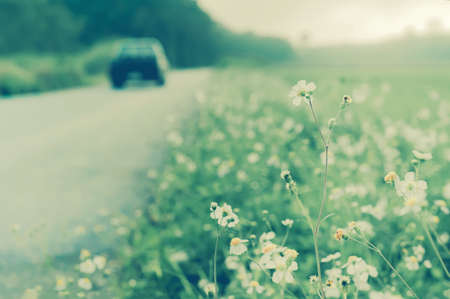 Beautiful  white  flowers at  roadside with blur of car and road landscape ,relax outdoor photo nature background