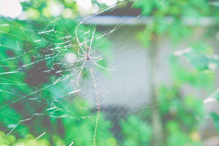 Spider with green bokeh ,wild animal  background Stock Photo