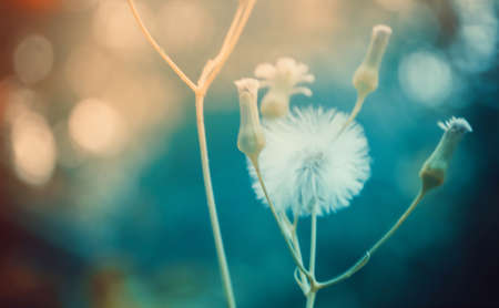 grass flower with colorful bokeh   sof tfocus nature,spring nanture  wallpaper background Imagens
