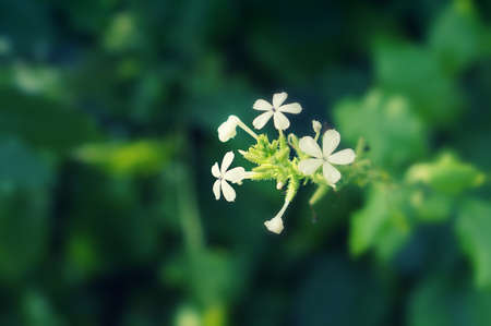 little white flower blooming  spring nature background Reklamní fotografie - 124728337