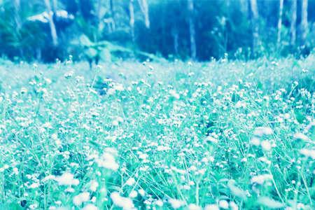 Grass flower blooming spring nature wallpaper background Reklamní fotografie - 124728428